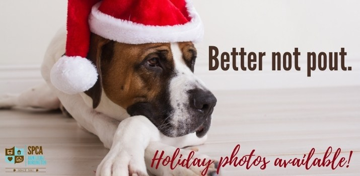 Picture your Pet with Santa