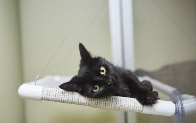 Feline Friday